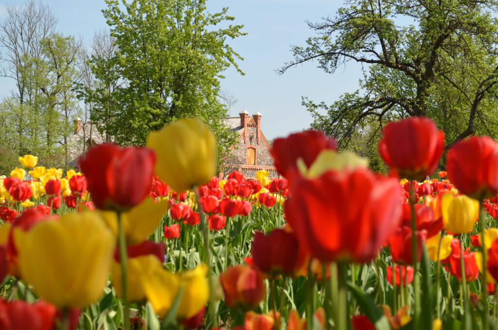 Tulpju Festivāls Burbišķu muižā, Lietuva